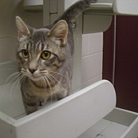 Adopt A Pet :: Georgia - Muscatine, IA