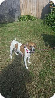 Hound (Unknown Type) Mix Dog for adoption in Grand Rapids, Michigan - Bayley
