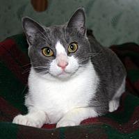 Adopt A Pet :: Norton Millet - Edmonton, AB