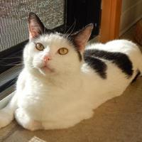 Adopt A Pet :: Hunter AKA Dalton - Monroe, WI