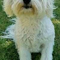 Adopt A Pet :: Holland-ADOPTION PENDING - Boulder, CO