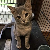 Adopt A Pet :: Charlotte- McDowell - Asheville, NC
