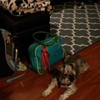 Adopt A Pet :: ZZZ  Lila ** courtesy post ** - Rancho Santa Margarita, CA