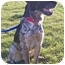 Photo 1 - German Shorthaired Pointer Mix Dog for adoption in Osseo, Minnesota - Alger