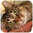Photo 1 - Domestic Shorthair Cat for adoption in Walker, Michigan - Debbie