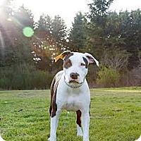 Adopt A Pet :: HALONA (Hallie) - Kingston, WA