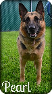 German Shepherd Dog Mix Dog for adoption in Beaumont, Texas - Pearl