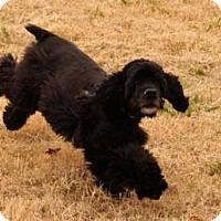 Adopt A Pet :: Bess - McKinney, TX