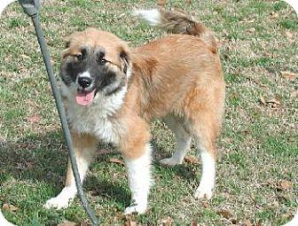 Collie Mix Dog for adoption in Wetumpka, Alabama - #80200A'Sally'