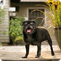 Adopt A Pet :: Ivan - Pismo Beach, CA