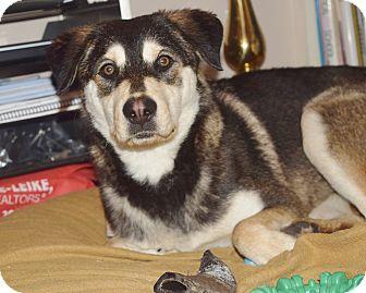 Husky/Labrador Retriever Mix Dog for adoption in Milwaukee, Wisconsin - KENDALL