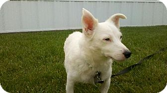 Jack Russell Terrier Mix Dog for adoption in Tyrone, Pennsylvania - Shiloh