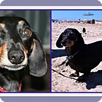 Adopt A Pet :: Derby - Forest Ranch, CA
