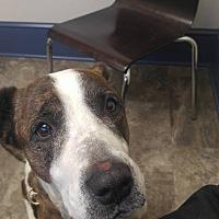Adopt A Pet :: Daisy - Rising Sun, MD