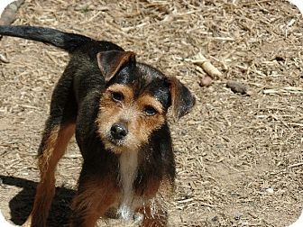 Terrier (Unknown Type, Small) Mix Dog for adoption in Washington, D.C. - Hope