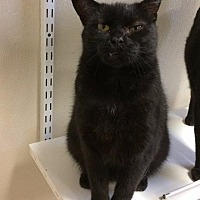 Adopt A Pet :: Baste - Fremont, OH