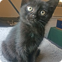 Adopt A Pet :: Onyx - East Brunswick, NJ