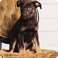 Adopt A Pet :: Pearl - Portland, OR