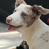 Adopt A Pet :: Jelly Bean - Sarasota, FL