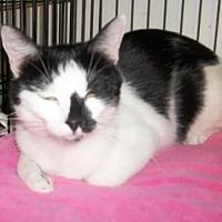 Adopt A Pet :: Skittles - Lacon, IL