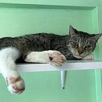 Adopt A Pet :: Priscilla - Hudson, NY