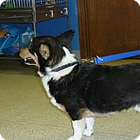 Adopt A Pet :: Kris - Inola, OK