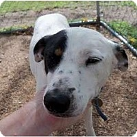 Adopt A Pet :: Anna Belle - Sand Springs, OK