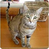 Adopt A Pet :: MAMA MYRRH - El Cajon, CA