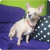 Adopt A Pet :: Fawn - Jacksonville, FL