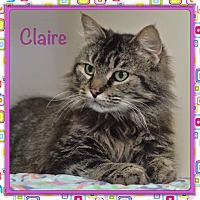 Adopt A Pet :: Claire - Foothill Ranch, CA