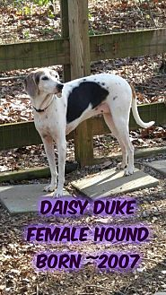 Hound (Unknown Type) Dog for adoption in Huddleston, Virginia - Daisy Duke