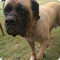Adopt A Pet :: Cricket - Cheney, KS