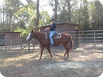 Quarterhorse/Paint/Pinto Mix for adoption in Cantonment, Florida - Trouble