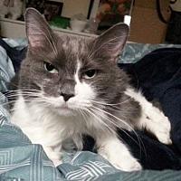 Adopt A Pet :: Glamouria - Edmonton, AB
