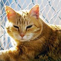 Adopt A Pet :: Reih - Tucson, AZ