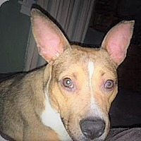 Adopt A Pet :: Houston - Allentown, PA