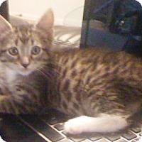 Adopt A Pet :: Lucy - Casa Grande, AZ