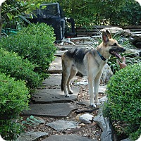 Adopt A Pet :: Gunner - Dripping Springs, TX