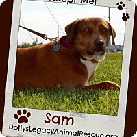 Adopt A Pet :: SAM - Lincoln, NE