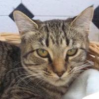 Adopt A Pet :: Zoe - Las Cruces, NM