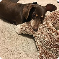 Adopt A Pet :: Minnie - Pearland, TX