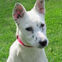 Adopt A Pet :: Princess - Woodstock, IL
