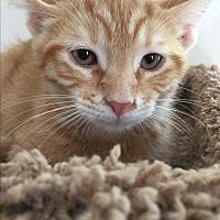 Adopt A Pet :: louie! - Owenboro, KY