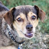 Adopt A Pet :: Lenny - El Cajon, CA