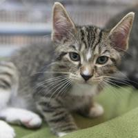 Adopt A Pet :: Lucian - Bedford, IN