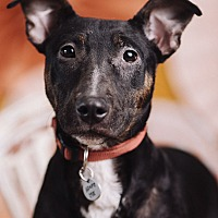 Adopt A Pet :: Maisie - Portland, OR