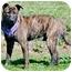 Photo 3 - Shepherd (Unknown Type) Mix Dog for adoption in Corona, California - DEXTER