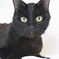 Adopt A Pet :: Phyllo - Roseville, CA