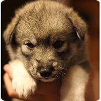 Adopt A Pet :: Annie - Fredericksburg, VA