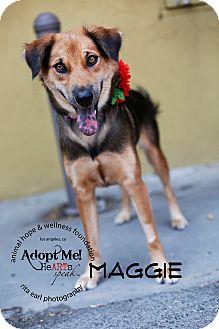 Shepherd (Unknown Type) Mix Dog for adoption in Sherman Oaks, California - Maggie
